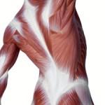 fascia souplesse exercices