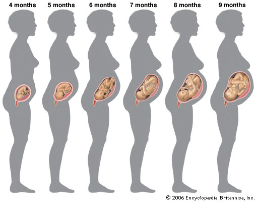 La grossesse mois par mois – Bien-être beauté et forme