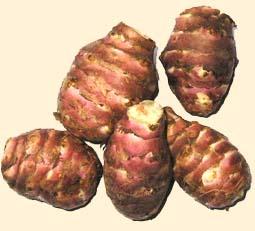 Aliments pour maigrir des fesses for Maigrir fesses