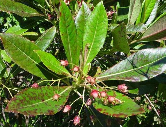Huile essentielle bois de rose # Huile Essentielle De Bois De Rose Anti Rides